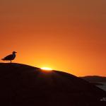 Solnedgång för säsong 2013