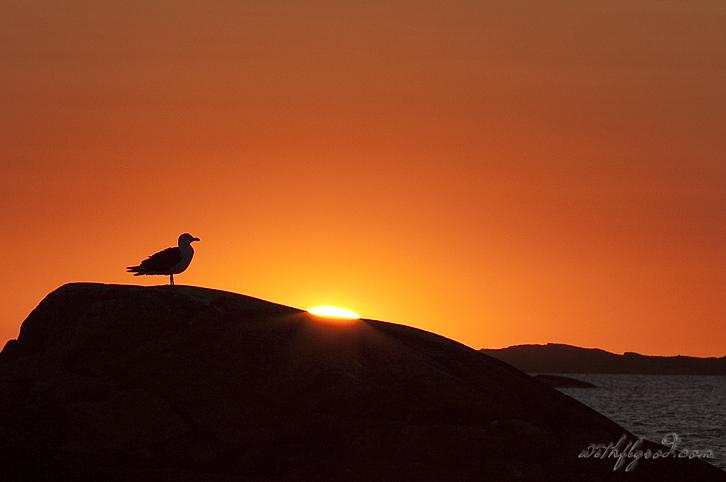 Seagull dusk copy
