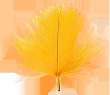 CdC Orange färgvisning copy copy