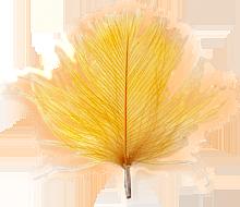 CdC ginger färgvisning copy