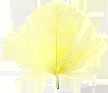 CdC med lt yellow färgvisning copy copy