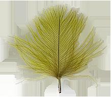 CdC olive färgvisning copy