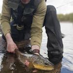 Fiskarsläpp 2015